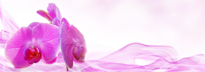 Lymph Website Header Orchid